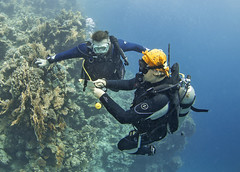 03.11 14 (KnyazevDA) Tags: diver disability undersea padi paraplegia amputee underwater disabled handicapped owd aowd scuba