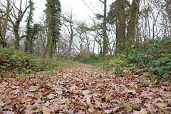 In den wilden Wäldern über Dromersheim :-)