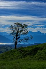 Baum Biken Wattenwil (Bugtris) Tags: baum landschaft alpen wolken sky berg canon 5dmkiii 85mm12iilcanon wattenwil