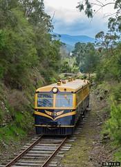 Walker (Dobpics O'Brien) Tags: victorian rail railway healesville victoria railcar walker valley yarra yvr railways railmotor 22rm