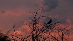 Sunset (Andreslozadah) Tags: sunset sky orange bird atardecer twilight nikon crepusculo ocaso p500 nioncoolpix