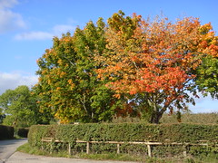 DSC02798 (Alex Hopkins) Tags: autumn trees england fall walk herefordshire footpath stroll shobdon alexhopkins