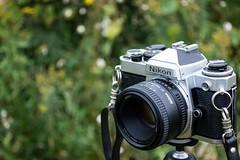 Nikon FE / 50mm 1.8D (e.m.alder) Tags: camera green film field grass analog 35mm nikon soft dof bokeh outdoor grain depthoffield 135 fe nikkor nikonfe 50mmf14d teamnikon d7100 1855mmf3556gvr