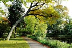 Zuiderpark Den Haag (Roel Wijnants) Tags: roelwijnants roelwijnantsfotografie roel1943 zuiderpark groen wandelen lucht sport spel rust trimmen herfst jaargetij absolutelythehague hofstijl haagspraak thehague denhaag 070 haagsgroen stilte