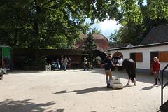 Doorn (Steenvoorde Leen - 1.6 ml views) Tags: horses horse jumping cross doorn pferde pferd reiten manege paard paarden springen 2015 utrechtseheuvelrug hindernis sgw arreche manegedentoom