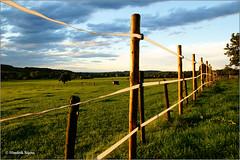 Fenced and Framed (2) (Hindrik S) Tags: hff fence hek stek freding afscheiding grass gras gers green grien groen limburg mechelen bommerig deoudehamer sunset evening avond jûn sonyphotographing sony sonyalpha slta57 a57 α57 tamron tamronspaf1750mmf28xrdiiildasphericalif 1750 sky skytheme color cloud clouds f90 20mm 160 iso200 nederland netherlands 2015 amount