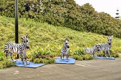 Zebras (chooyutshing) Tags: singapore display lanterns zebras marinabay baysouth zhongqiujie gardensbythebay supertreegrove midautumnfestival2015