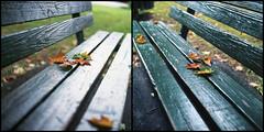 Fall (Rafakoy) Tags: park fall 120 6x6 tlr film nature colors leaves mediumformat bench season leaf minolta pennsylvania centralpark pa negative konica churchstreet courtstreet churchst export 50iso honesdale konicaimpresa50 75mm c41 2015 courtst autocord impresa minoltaautocord rokkor75mmf35 epsonv600
