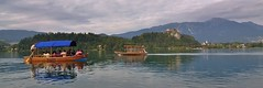 Slovenia - beautiful Lake Bled (stevelamb007) Tags: alps reflection tourism clouds boat julian nikon wake overcast tourists tokina slovenia bled rowing superwideangle lakebled bledcastle d90 pletna stevelamb 1116mmf28