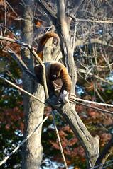 DSC_1238 (gobucks2) Tags: zoo 2015 louisvillezoo november2015 louisvillekentuckyzoo fall2015