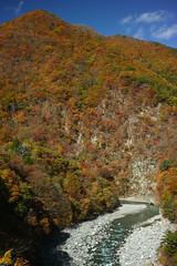 Autumn leaves (Aki tomo PHOTO) Tags: autumn nature leaves japan