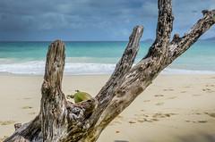 DSC_9813 2 (NICOLAS POUSSIN PHOTOGRAPHIE) Tags: soleil eau sable bleu coco fin vague plage rocher palmier bois seychelle turquoide