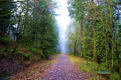 My Path (ancardwel) Tags: city trees nature rose oregon forest portland butte northwest walk or trail powell cit trres