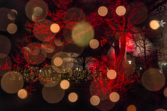 Christmas Trees Outside The National Museum (pni) Tags: christmas xmas light red tree suomi finland helsinki quiet bokeh multipleexposure bubble helsingfors nationalmuseum tripleexposure multiexposure skrubu pni kansallismuseo thenationalmuseumoffinland pekkanikrus