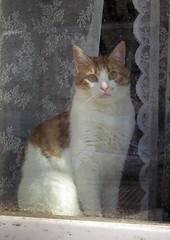 Berlin (253) (Silvia Inacio) Tags: berlin window cat germany tabby gato janela berlim alemanha