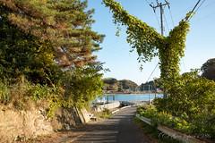 (GenJapan1986) Tags: 2016            miyagi island nonoshima japan sabusawajima landscape sea  fujifilmx70