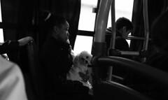 GUARDIA DE SEGURIDAD. CABA. ARGENTINA. (tupacarballo) Tags: caba buenosaires argentina capitalfederal tupacarballo dog perro animal mujer woman contraluz blancoynegro blackwhite canon streetphotography fotografadocumental bus colectivo transportedepasajeros transporte pblico canonpowershotg16 g16 transporteurbano