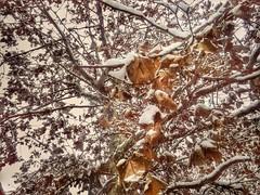 14440703_1112198925532775_6316902596577065564_n (dragica_basaric) Tags: winter snow wonderland magic magical snowy flake nature green colours streets treet postcar postcards love train phot january 03 2016 photo photography d b danchy92 dragicabasaric lapovo serbia srbija srb sumadija dbphotography