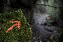This Way (janwellmann) Tags: forest heading rock arrow
