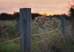 Pastel at the fence_c (gnarlydog) Tags: adaptedlens cmountlens canontv1650mmf14 manualfocus vintagelens sunset fencepost fenceline australia rural bokeh shallowdepthoffield serene softlight