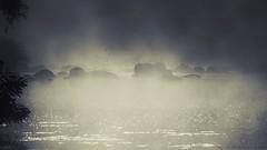 Alba sul Fiume Arno - (Laterina) (M K S v i d e o - p h o t o g r a p h y) Tags: arno arnonaturalpark laterina toscana tuscany toscane tuscani valdarno marksoetebierphotography mksvideophotography marksoetebier markchristiansoetebierphotography mks alba nebbia mist worldofnaturethebest laquintaessenza