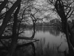 South, (Jess Monier) Tags: south town winter cold trees white black river leaves afternoon melancholy water mirror quiet thoughs there moment place