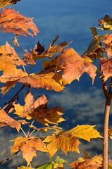 DSC_0096 (florian.glechner) Tags: herbst bume pichlingersee bltter autumn oktober natur farben colors light licht herbstlandschaft farbe herbstfarben trees landscape landschaft see lake himmel heaven wiese grass