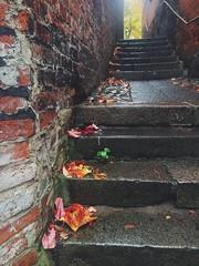 Autumn (Wellenpriester) Tags: herbst leeves lbeck