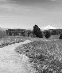 (tony_deieso) Tags: mthood blackandwhite hiking trail monochrome landscape