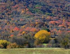 Colori d'autunno sull'Altipiano delle Rocche (giorgiorodano46) Tags: ottobre2016 october 2016 giorgiorodano nikon roccadimezzo altipianodellerocche autunno autumn appennino apennines foliage feuillage boschi woods forest fall