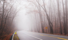 Foggy drive (static_dynamic) Tags: fog foggy road route1 trees avenue surreal drive
