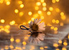 December Daisy ... (MargoLuc) Tags: daisy margherita flower winter golden bokeh table reflections mirror white petals festive mood coming christmas lights wildflower indoor