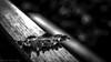 WAITING (Oliver Plagge) Tags: bw blackandwhite monochrom schwarz weiss scharzweiss natur autumn herbst bokeh contrast winter drops ice leaf blätter laub