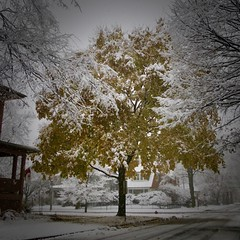 Hey Wait (Crawford Brian) Tags: oakpark snow illinois midwest winter december autumn fall leaves seasons transition