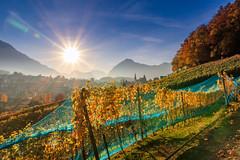 Spiezberg (andreas.liechti) Tags: berge herbst reben spiez spiezberg trauben