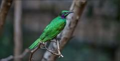 Niagara Falls (bird!) (canuckguyinadarkroom) Tags: canon550d canon70200l