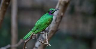 Niagara Falls (bird!)