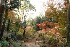 DSC02785 (MrSUIZOU) Tags: 京都 紅葉 北野天満宮 平野神社 十月桜