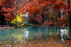 Atmosphere of autumn (annalisabianchetti) Tags: autumn autunno water trees alberi fall leaves nature natura colors