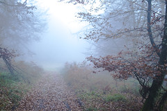 Autumn tales... (...in the woods...) Tags: autumn mist misty fog foggy forest nature leaves trees mysterious atmosphere atmospheric landscape december cold otoo diciembre niebal niebla atmosfera bosque arboles naturaleza paisaje woods