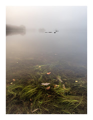 Water Grass.jpg (Dylan Nardini) Tags: loch chon colour trossachs lomond trees ater morning mist scotland sky autumn 2016 weather ard clouds