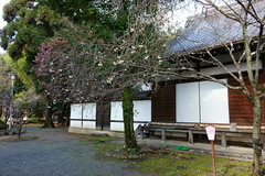 DSC02836 (MrSUIZOU) Tags: 京都 紅葉 北野天満宮 平野神社 十月桜