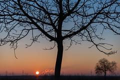 Sonnenuntergang (mit Baum) (JBsLightAndShadow) Tags: heidelberg nikon nikond750 d750 tamron tamronsp2470mmf28divcusd dezember december winter 2016 winter2016 dmmerung abenddmmerung sonnenuntergang sonne baum bume feld felder dawn sunset sun tree trees field fields