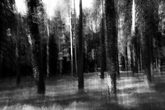 (Jordy B) Tags: bw blur france noiretblanc bretagne arbre fort flou finistre nvez lehnan