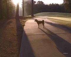 The Morning Walk (Cliff Brane) Tags: family dog kiko inverness
