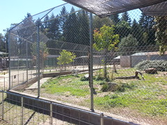 20150919_123520 (mjfmjfmjf) Tags: oregon zoo 2015 greatcatsworldpark