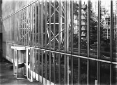 Barbican Conservatory (michael-e) Tags: london mamiya film rollei barbican cityoflondon 400s ddx 645j ilfordilfotecddx developer:brand=ilford developer:name=ilfordilfotecddx scannedwithd600tamron90mmmacro filmdev:recipe=10395