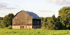 Vacant old wooden barn - Caledon, Ontario (edk7) Tags: sunset sky cloud ontario canada building tree abandoned field architecture barn rural landscape countryside farm country evergreen crop vacant deciduous weatheredwood 2009 caledon oldstructure rustytinroof gambrelroof barnboard peelregion nikond300 edk7 sigma2470mm128dghsmex
