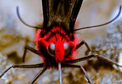 "Butterfly, a bit closer (Paul Nicodemus) Tags: travel people mountains rain clouds landscapes skies azure adventure journey solo odyssey assam himalayas valleys unplanned tawang natives bomdila tezpur ""westbengal"" ""arunachalpradesh"" ""bumlapass"" ""selapass"" ""paulartography"" ""paulnicodemus"
