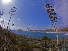 Bosque de pitas cielo (AAcero) Tags: almeria cabodegata genoveses